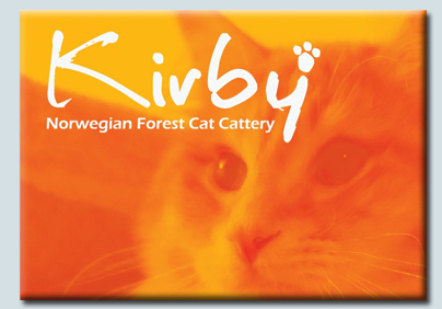 Kirby Norwegian Forest Cat Cattery