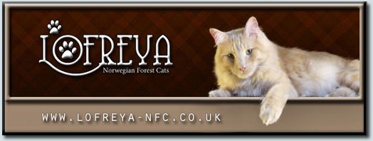 Lofreya Norwegian Forest Cats - Cardiff